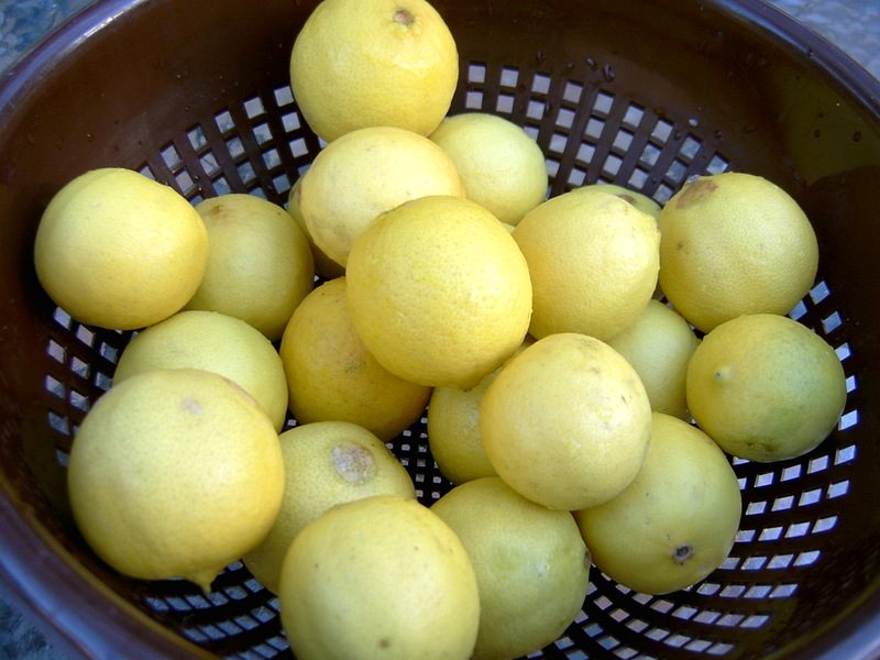 Limes_2