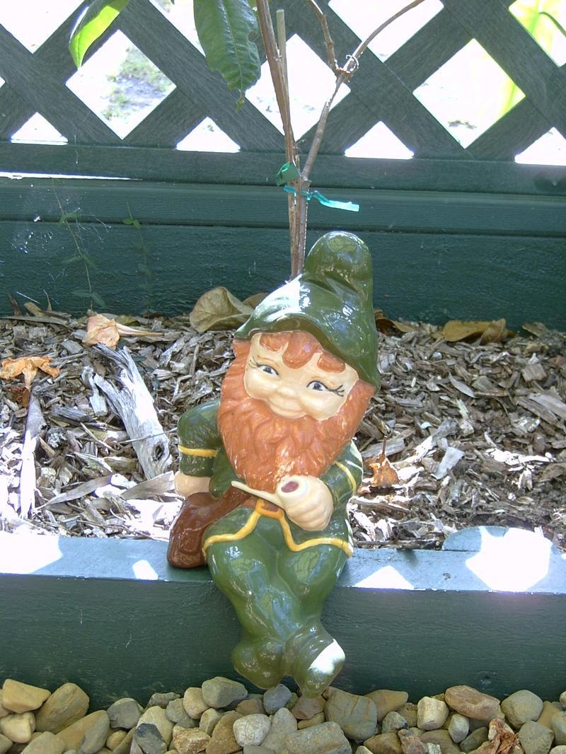 Gnome_003