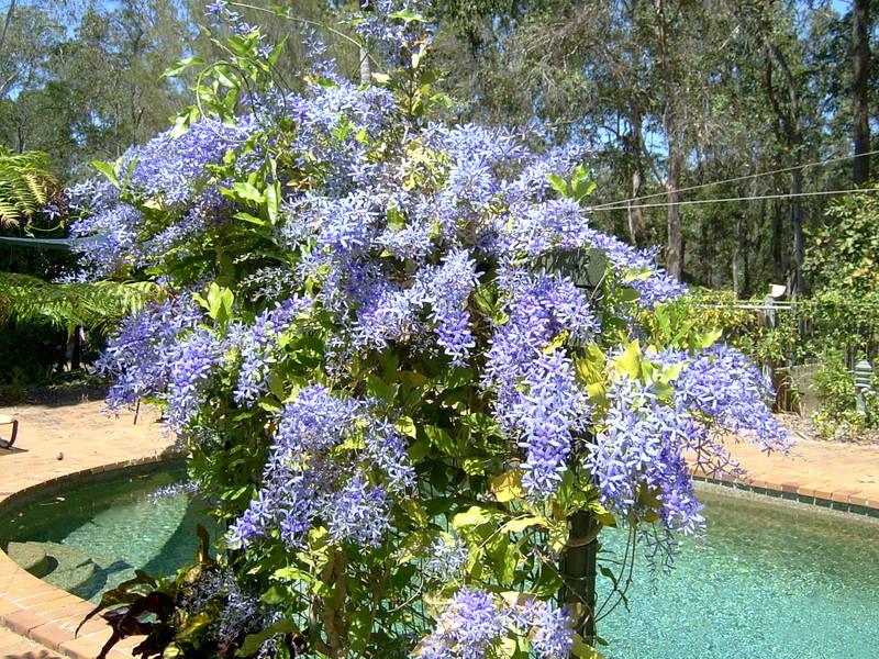 Purple_wreath_004