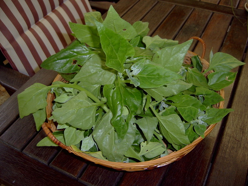 Warrigal_greens_1