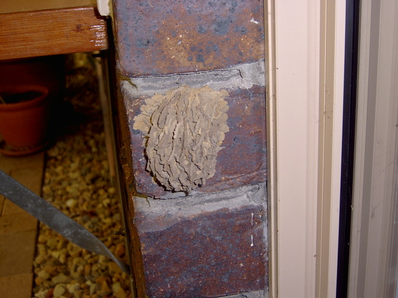 Wasp_nests_002